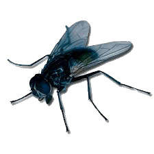 Απεντόμωση για μύγες